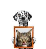 Hund hält ein Porträt der Katze in seinen Tatzen Lizenzfreies Stockbild