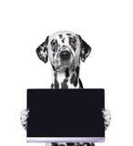 Hund hält eine Tablette oder einen Laptop Lizenzfreies Stockfoto