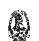 Hund hört nichts -- er schließt die Ohren Stockfoto