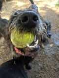 Hund 14 lizenzfreie stockfotografie