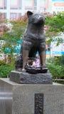 Hund, Hajiko, Tokyo, Japan, Stockfotografie