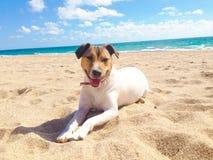 Hund, hav och strand i sommar arkivbilder