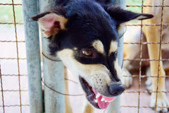 Hund heftig Stockfotos