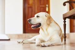 Hund hemma arkivfoton