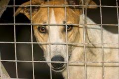 Hund hinter dem Gitter Stockfotografie