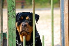 Hund hinter den Stangen Stockfotografie