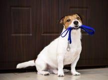 Hund hinter der Türaufwartung und freundlichem Haus sein Eigentümer mit Leine im Mund stockfoto