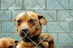 Hund hinter einem Zaun stockbilder