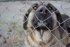 Hund hinter einem Zaun Lizenzfreie Stockbilder