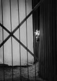 Hund hinter Gittern, Augen schauend Lizenzfreies Stockfoto