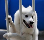 Hund hinter Stäben Stockbild