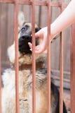 Hund hinter Stäben stockfoto