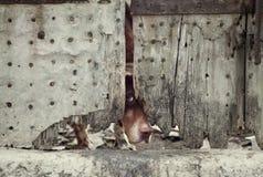 Hund hinter Tür Lizenzfreies Stockfoto