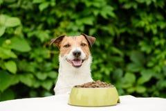 Hund hinter Tabelle mit der Schüssel voll vom trockenen Lebensmittel stockfotografie