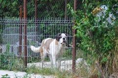 Hund hinter Zaun stockfoto