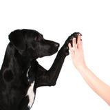 Hund hohe fünf lizenzfreies stockbild