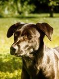 Hund 132 i ängen Arkivfoton