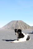 Hund i ökenberg Royaltyfria Foton