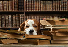 Hund i arkiv royaltyfria foton