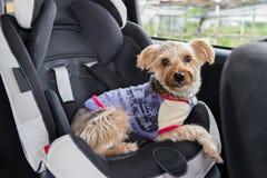 Hund i barnet Seat Royaltyfri Bild