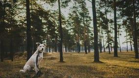 Hund i barrskog royaltyfri bild