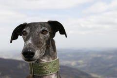 Hund i berg Royaltyfri Bild