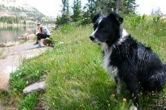 Hund i bergen royaltyfri foto
