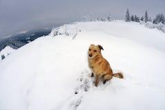 Hund i bergen arkivbild