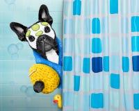 Hund i dusch fotografering för bildbyråer