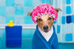 Hund i dusch eller wellnessbrunnsort royaltyfria bilder