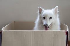 Hund i en ask Arkivfoto
