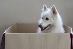 Hund i en ask Royaltyfri Fotografi
