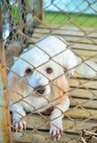 Hund i en bur. arkivbilder