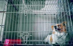Hund i en bur Arkivfoto