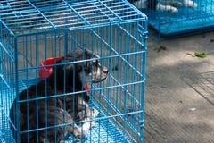 Hund i en bur Royaltyfri Bild