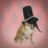 Hund i en gyckelmakaremaskering och en bästa hatt Arkivfoton