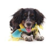 Hund i en halsduk Royaltyfria Bilder
