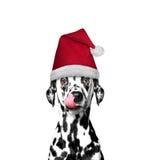 Hund i en hatt av Santa Claus Arkivbilder