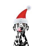Hund i en hatt av Santa Claus Royaltyfri Bild
