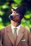 Hund i en hatt och en dräkt royaltyfria foton