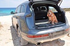 Hund i en känga Arkivbilder