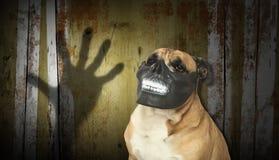 Hund i en läskig tandmaskering med den digitala bakgrunden Royaltyfri Bild
