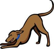 Hund i en lekpilbåge Arkivfoton
