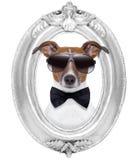 Hund i en ram arkivfoton