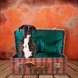 Hund i en resväska arkivbild