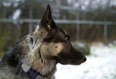 Hund i en snöig trädgård Royaltyfri Fotografi