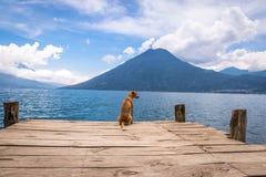Hund i en träpir på Atitlan sjön Arkivfoto