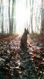 Hund i en vinterskog Arkivfoto