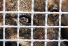 Hund i fångenskap arkivbild