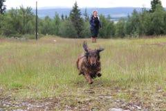 Hund i flykten royaltyfria bilder